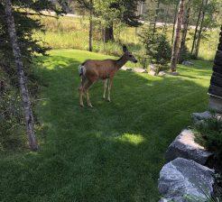 cropped-yard-and-deer.jpg