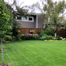 Nice Yard 1